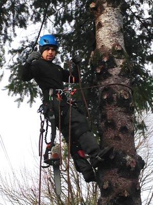 Tree Care Portland