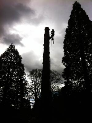 Tree Service Vancouver Washington