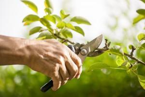 Tree Pruning Vancouver WA