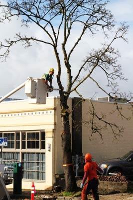 Tree Care Vancouver WA
